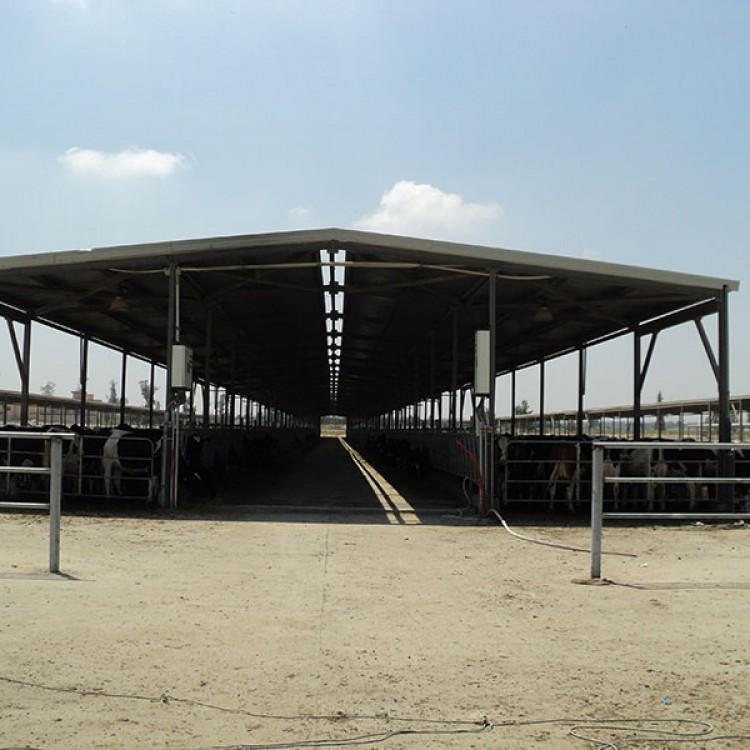 Danone Dairy Farm, Egypt